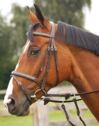 Dyon Trense Crystal Flash Noseband